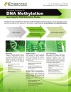 Complete Solutions for DNA Methylation: Gene Specific DNA Methylation Studies
