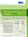 Mitophagy monitoring in living cells