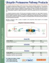 Ubiquitin Proteasome Pathway Products