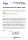 TERC gene amplification detection probe