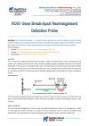 ROS1 gene break-apart rearrangement detection probe