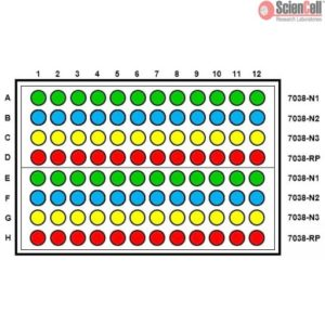 Sciencell SARS-Cov-2 Coronavirus Real-time RT-PCR Plate Layout